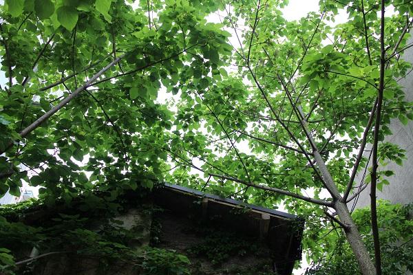 恵比寿の緑
